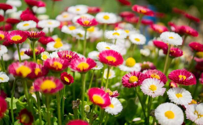 Gardening Plants