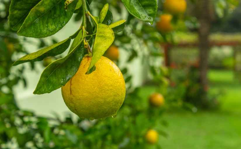Preventing Diseases in Fruit Trees